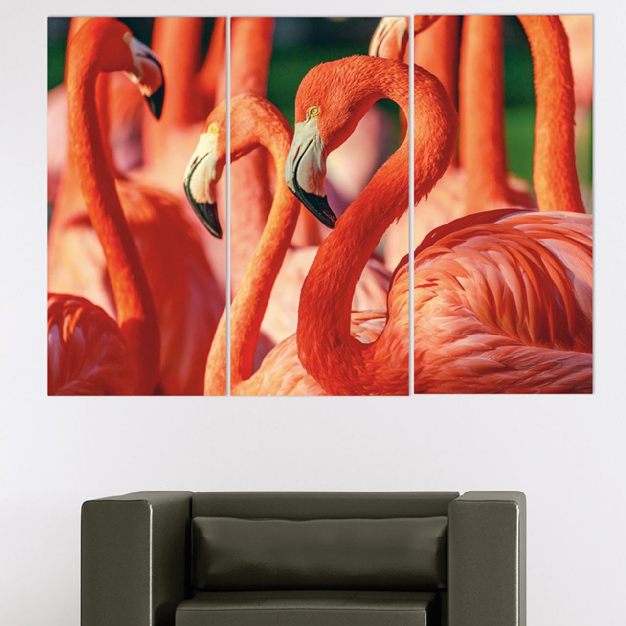 Imageland Bild Flamingos